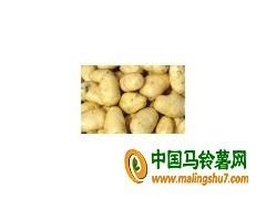 求购优质土豆 ()