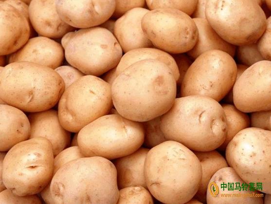 大量收购马铃薯 ()
