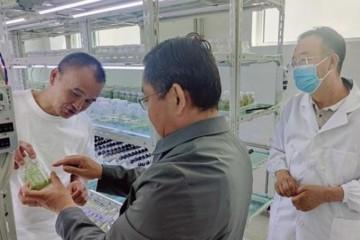 青海:建成全国最重要的马铃薯繁种基地 ()