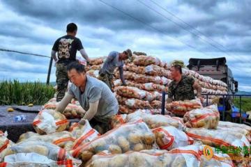 宁安农场:万亩马铃薯销往省外多地 ()