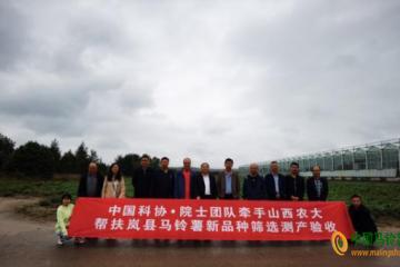 岚县:马铃薯早熟品种VF产量亩产达3877.5千克