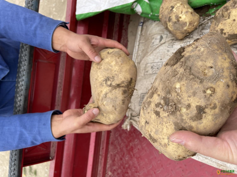本人有大量土豆供应 ()