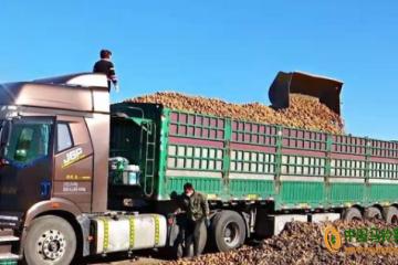 齐齐哈尔梅里斯:机械化作业助力马铃薯增产增效
